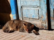 cat-1865263_640.jpg
